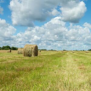green-grassy-field-hay-stacks-sunny-summer-day-village-russia (1)