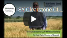 SY Clearstone Winter Wheat1