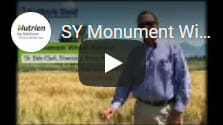 SY Monument Winter Wheat
