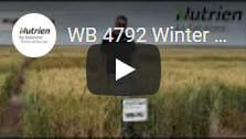 WB 4792 Winter Wheat
